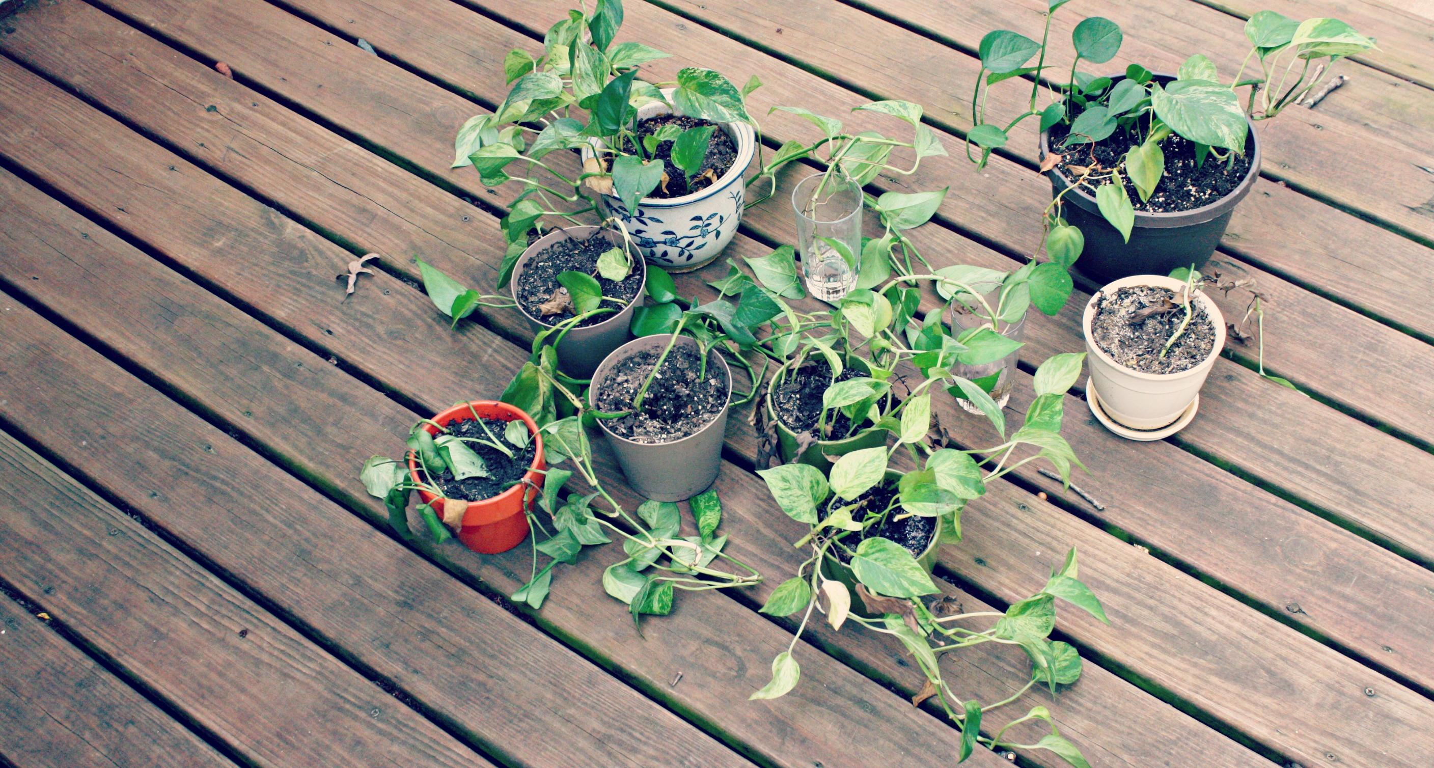 how to take care of a plant that is dying