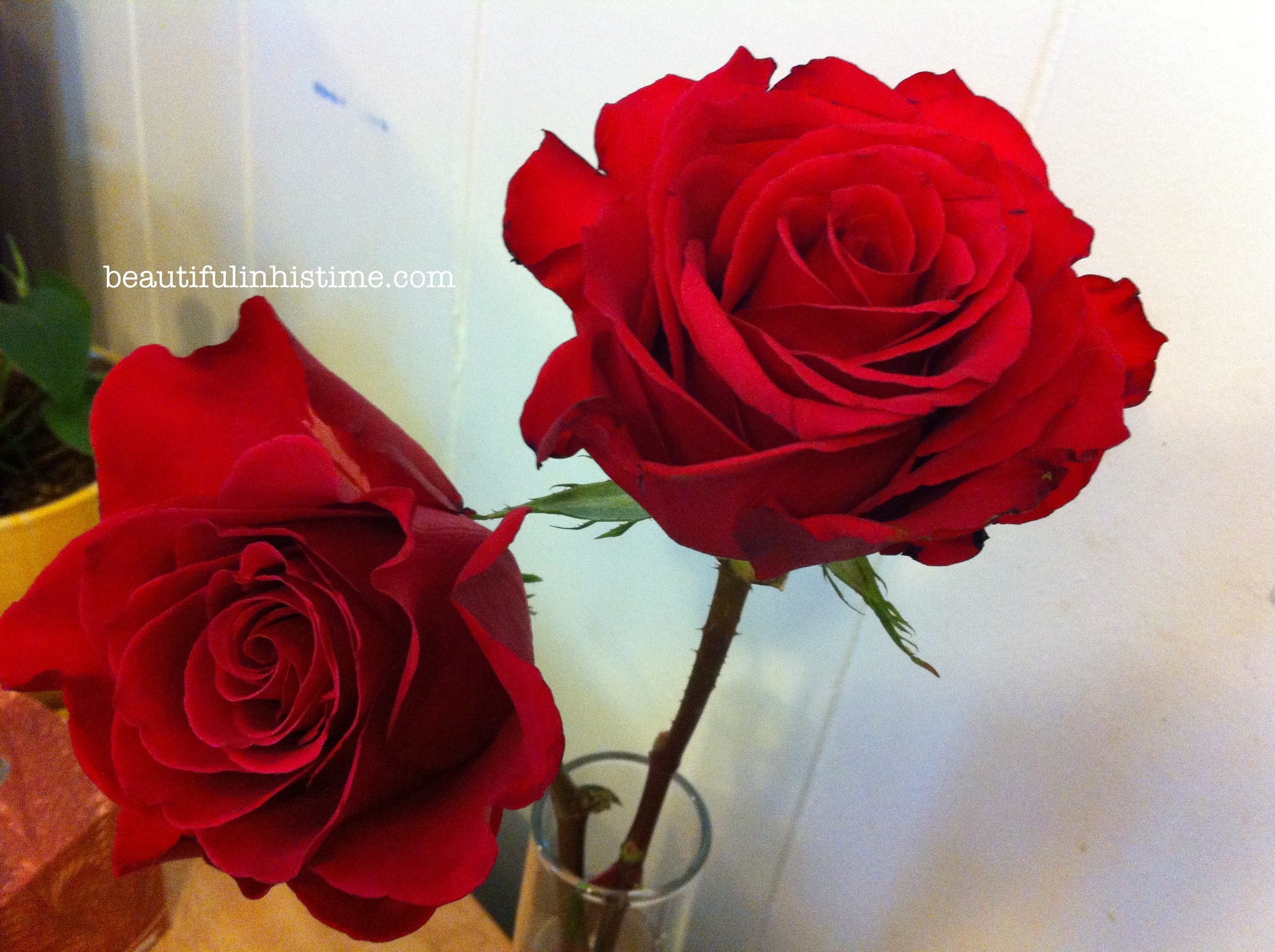 roses from friends
